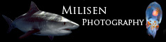 Jeff Milisen UW Photographer