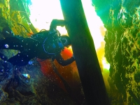 Cave Diving in Florida |