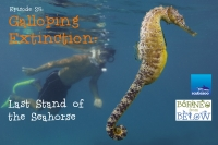 Galloping Extinction: The Seahorses Last Stand – Borneo From Below: Ep25 |