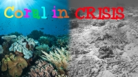 Coral in Crisis |