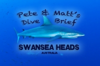 Swansea Heads Shark Dive | Grey Nurse Sharks