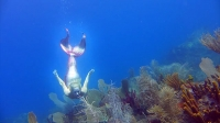 Real mermaid in Guadeloupe |