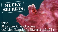 Mucky Secrets (full) - The Marine Creatures of the Lembeh Strait  | Eschmeyer's Scorpionfish