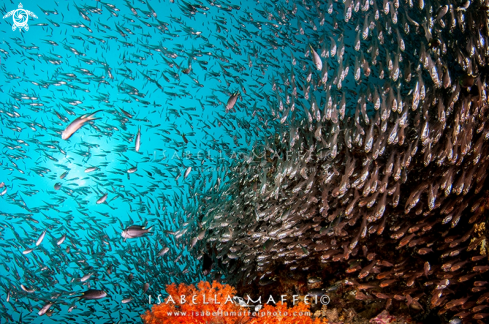 A school of fish
