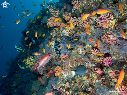 A Reef fishes, corals