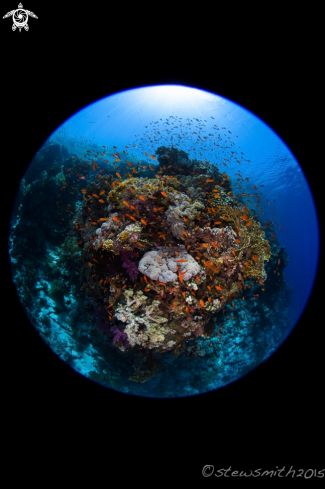 A Reef Scenes
