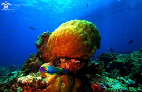 A Pointe Aux Piments reef,5 metres