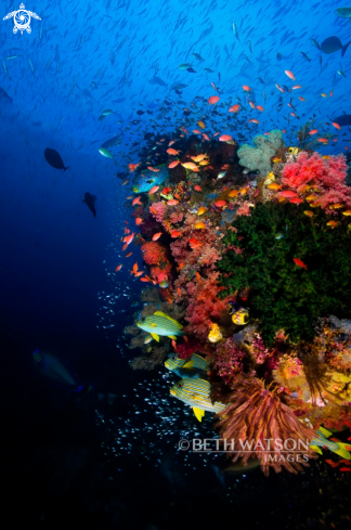A Reef Scene with glass fish