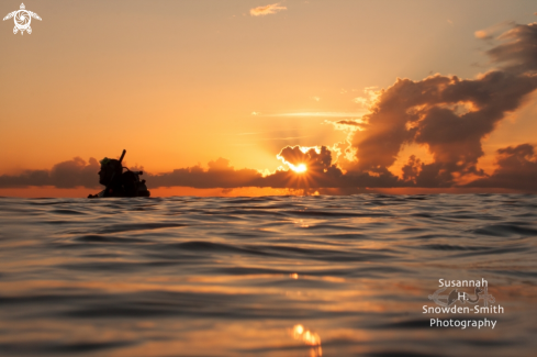 A Diver at sunset