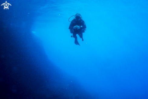 A Diver in the darkness