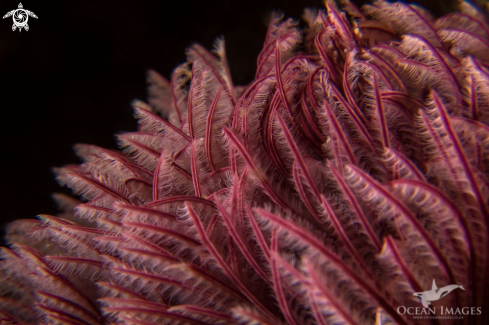A Feather Duster Tubeworm