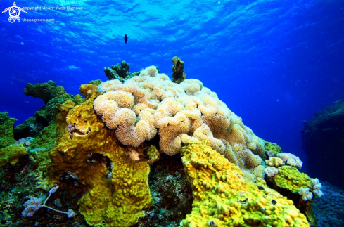 A Coral reef formation,Pointe Aux Piments,Mauritius
