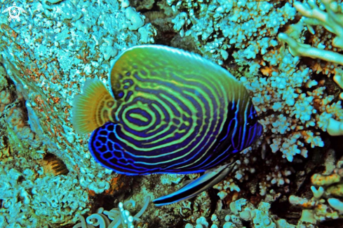 A reef fish