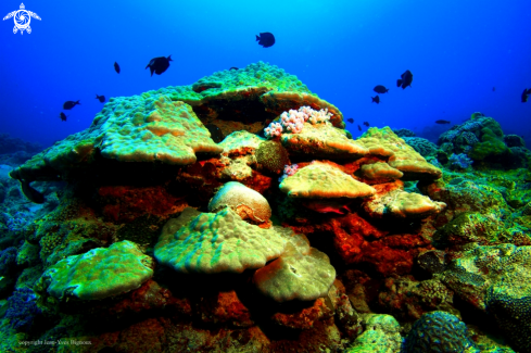 A Coral reef formation ,Balaclava Turtle Bay,Mauritius