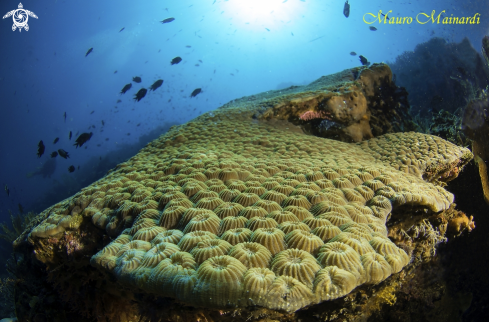 A Reef panorama