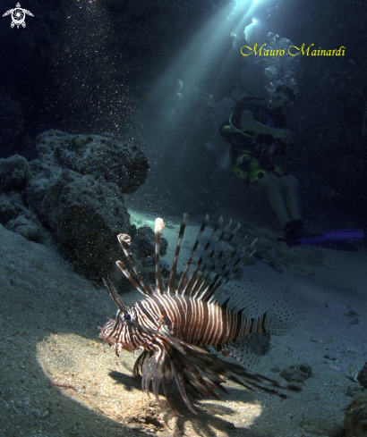 A Lionfish in the cave