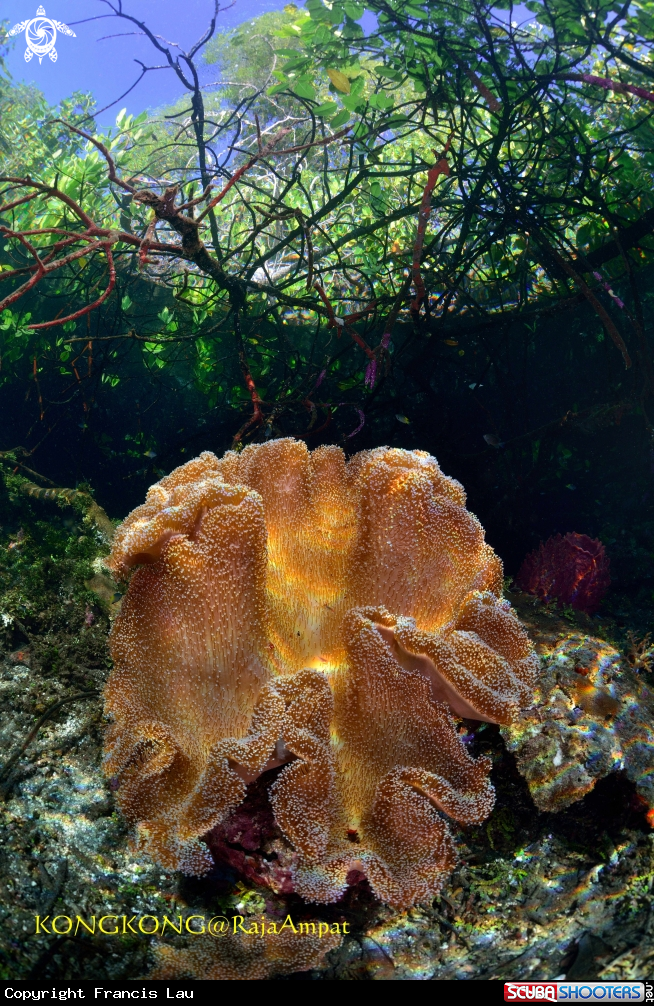 A Coral