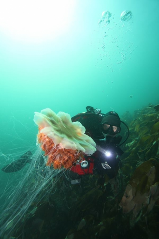 A Lions mane jelly