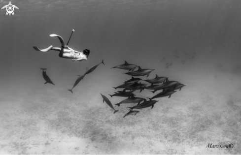 A Freediving girl with dolphin famliy