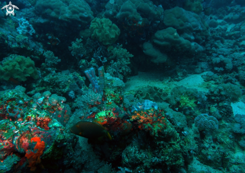 A CORAL REEFS