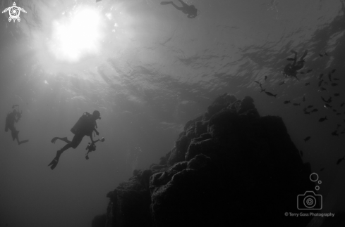 A (homo sapiens) | divers & pinnacle