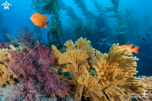 A California's Reefs