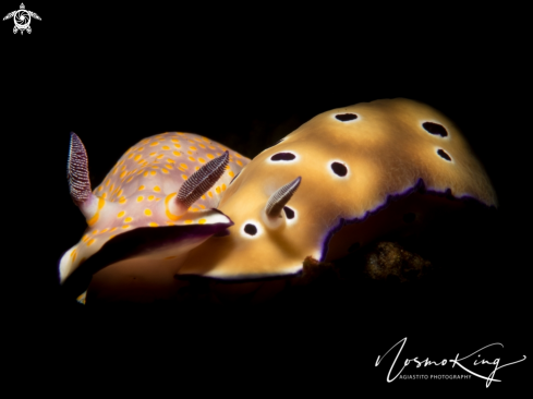 A Colourful sea slug or dorid nudibranch