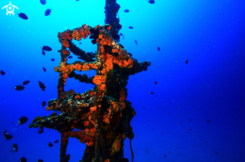 A Mast at approx 15 m of the Shipwreck Jebedh.