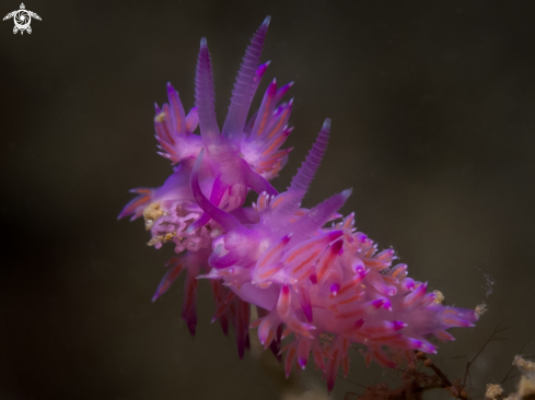 A Nudibranch