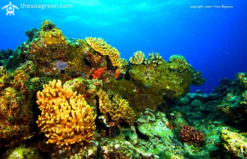 A Coral reef formation Balaclava