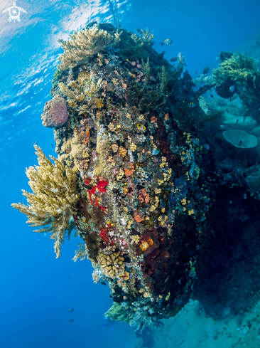 A Japanese Wreck