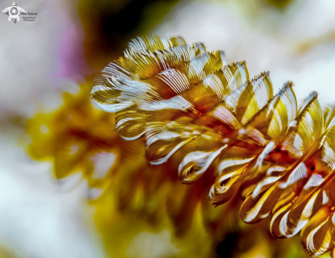 A Soft Coral