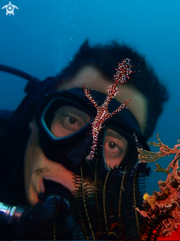 A Ornate Ghost Pipefish & Human