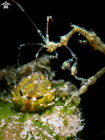 The Shawn the Sheep Nudi and Skeleton Shrimp